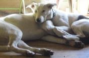 my-owners-cuddling