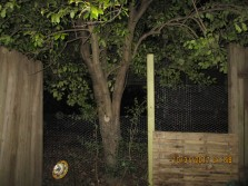 friend secured area with chicken wire