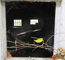 window-of-neighbors-garage-broken-out-completely-wood-glass-and-all.jpg