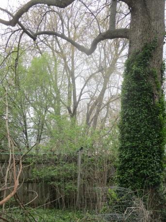 tree love in backyard