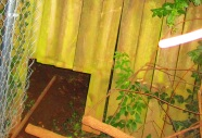 5-26-2018 11pm, backyard privacy fence odd light reflected in flash