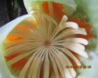 center of tulip tree flower