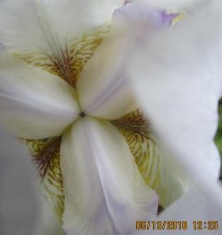 inside an iris