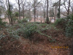 12-12-18 where once tall pines stood bioagent or herbicide used to kill off friend's trees