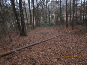 another view of pine that was cut at fence line showing complete right of way style of clearing against fence of south neighbor
