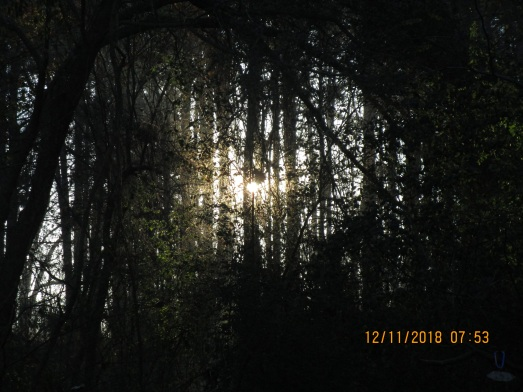 jps forest an hour after sunrise