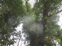 odd light reflection in trees