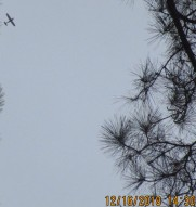planes fly over