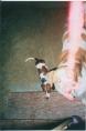 photographed spirit of dog